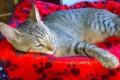 Gatti, gatto, gattini - Interpretazione dei sogni