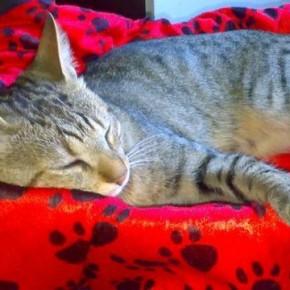 Gatto, gatti e gattini - Interpretazione dei sogni