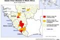Ebola: il virus potrebbe sbarcare in Italia?