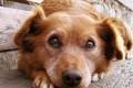 Cane, cani - Interpretazione dei sogni