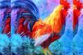 Gallo, galli - Interpretazione dei sogni