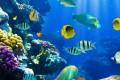 Pesci, pesce - Interpretazione dei sogni