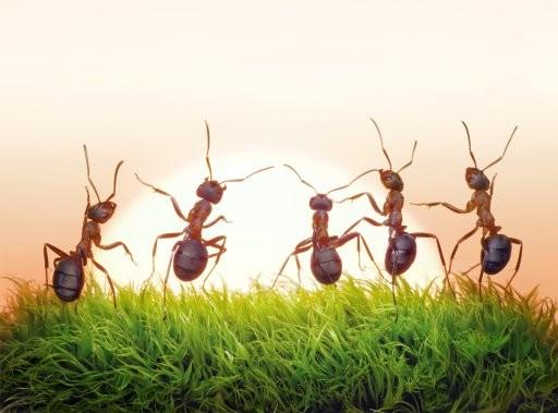 Sognare formiche
