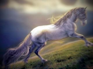 Cavalli, cavallo - Interpretazione dei sogni