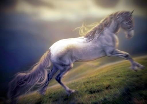 Cavallo, cavalli - Interpretazione dei sogni