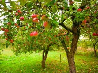 Albero di mele - Significato del sogno