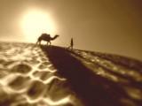 Cammello, cammelli – Interpretazione dei sogni
