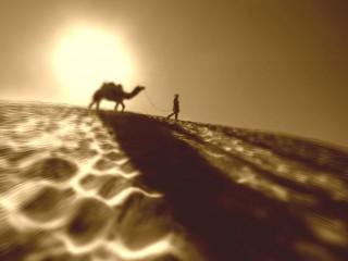 Cammello - Interpretazione dei sogni