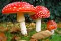 Funghi, fungo - Interpretazione dei sogni