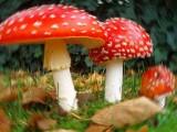 Funghi - Interpretazione dei sogni