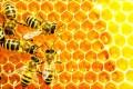 Api, ape - Interpretazione dei sogni