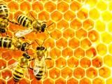 Api, ape – Interpretazione dei sogni