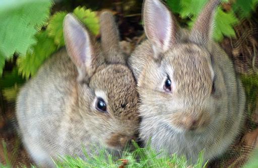 Conigli - Interpretazione dei sogni