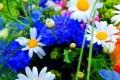 Fiori, fiore - Interpretazione dei sogni