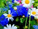 Fiori, fiore – Interpretazione dei sogni