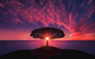 Albero al tramonto - sfondo desktop