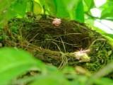 Nido, nidi – Interpretazione dei sogni