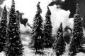 Pino, albero - Interpretazione dei sogni