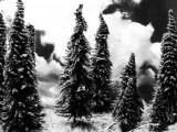 Pino, albero – Interpretazione dei sogni