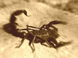 Scorpioni, scorpione - Interpretazione dei sogni