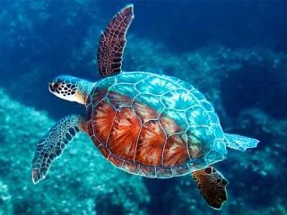 Tartarughe,tartaruga - Interpretazione dei sogni - Romoletto Blog