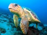 Tartarughe,tartaruga – Interpretazione dei sogni