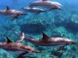 Delfini - Interpretazione dei sogni