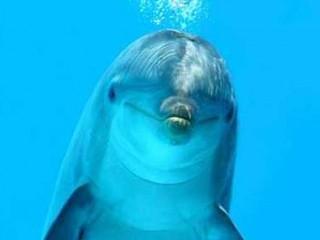 Delfino sott'acqua