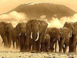 Elefanti - Interpretazione dei sogni