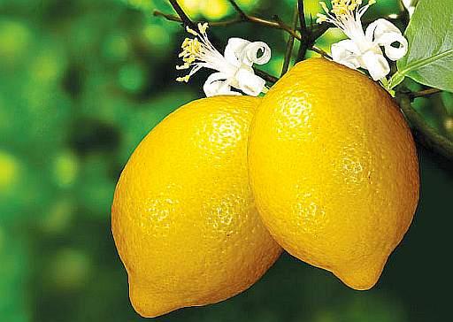 Limoni - Interpretazione dei sogni