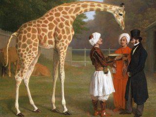 Giraffa - Interpretazione dei sogni