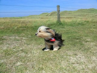 Cane contro vento