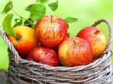 Mele, mela – Interpretazione dei sogni