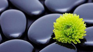 Pietre zen con fiore - Sfondo desktop