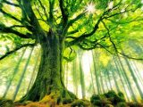 Albero, alberi - Interpretazione dei sogni
