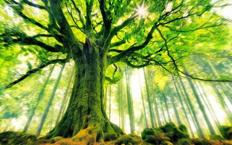 Albero, alberi - Interpretazione dei sogni - Romoletto Blog