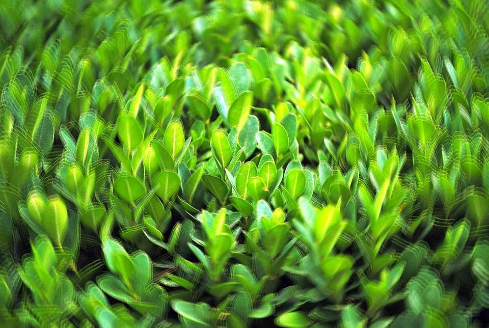 Piante pianta interpretazione dei sogni romoletto blog for Creatore della pianta della casa
