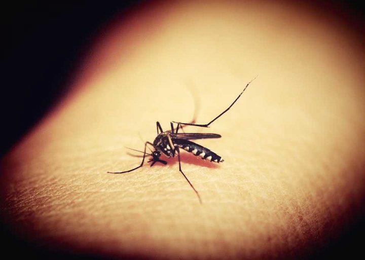 Zanzare - Interpretazione dei sogni