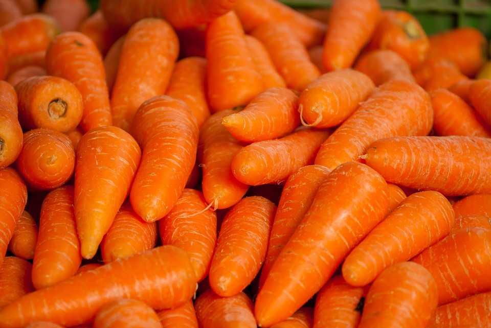 carote e carotine
