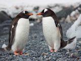 Pinguini - Interpretazione dei sogni