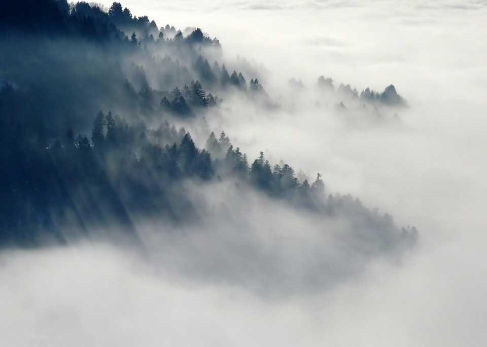 Nebbia sulle foreste del nord