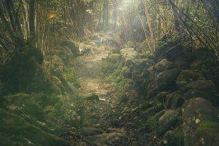 Sentiero con foschia