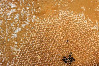 Miele ancora nell'alveare