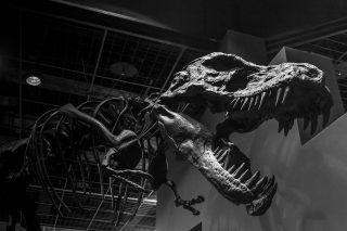 Scheletro di dinosauro al museo